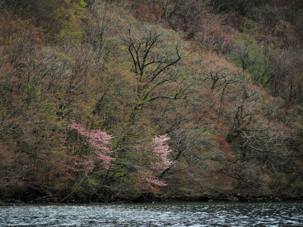 桜と新緑と